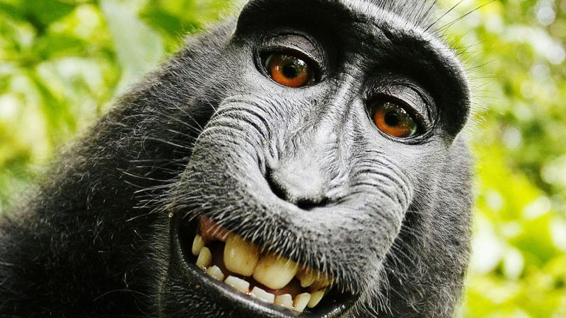 Macaque takes a selfie: PETA publicity stunt or genuine animal rights issue?